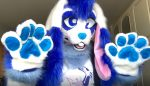 [YES] Faulkner the Lop Rabbit by Mei Fursuits