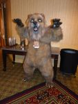 [YES] Grubbs Grizzly Bear Fullsuit by Beastcub