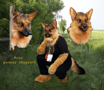 [YES] Aron German Shepherd Partial by Clockwork Creature