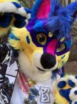 [YES] Kavi the Sunset Coyote Partial by ThunderHowl Studios