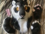 [YES] Miles Smilodon Partial by Ugolek Fursuit Studio