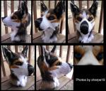 [YES] Toony Husky by Sharpe19